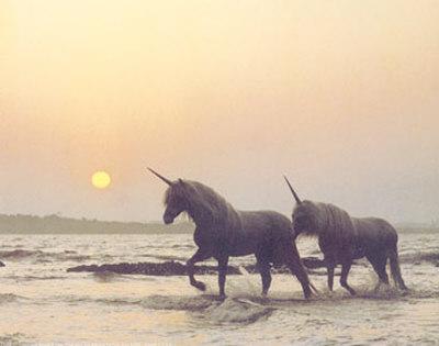 real_unicorns-1855