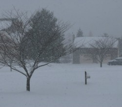 Please enjoy this lovely photo of a snowstorm by Peter Griffin (no, not that one) from publicdomainpictures.net.